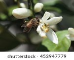 close up image of bee sitting... | Shutterstock . vector #453947779