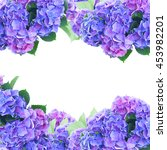 Blue and violet hortensia...