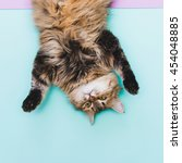 Stock photo funny portrait of cat head over heels 454048885