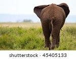Elephant In Tarangire National...