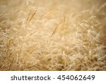 Nature Oats Field Background....
