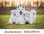 Stock photo white swiss shepherd dog with its puppies 454139074