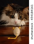 Stock photo maine coon cat staring down toy mouse 454184161