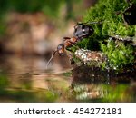 ant standing on the bank of the ... | Shutterstock . vector #454272181
