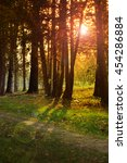 sunrise in autumn forest. | Shutterstock . vector #454286884