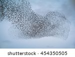Large Flock Of Starlings