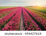Beautiful Tulips Field In The...