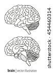 human brain anatomy... | Shutterstock .eps vector #454460314