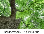 underneath the canopy of of a... | Shutterstock . vector #454481785