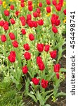 bright flowers tulips  landscape | Shutterstock . vector #454498741