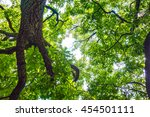 green forest image | Shutterstock . vector #454501111