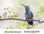watching and waiting  madera... | Shutterstock . vector #454538599