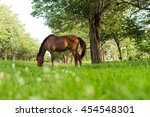 Horse Eating In Soft Green...