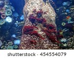 Small photo of Underwater photograph of many colorful actinias waving with their tentacles in the Lisbon Oceanarium, Portugal. Actinia equina. Sea anemone. Beautiful underwater wild world.