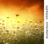field of daisies at sunset. | Shutterstock . vector #45456391