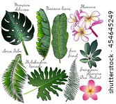 vector set of palm leaves.... | Shutterstock .eps vector #454645249