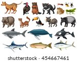 set of different types of wild... | Shutterstock .eps vector #454667461