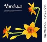 narcissus   Shutterstock .eps vector #454767991