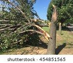 tornado storm damaged tree | Shutterstock . vector #454851565