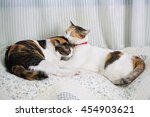 domestic cat lying on the bed  | Shutterstock . vector #454903621