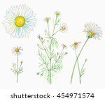 Set Of Chamomile  Daisy ...