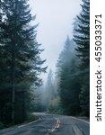 Road Thru Mountain Forest In Fog
