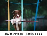 border collie in the playground | Shutterstock . vector #455036611