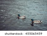 Amazing Two Friends Ducks Bird...