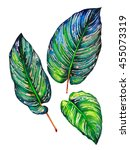 Set Of 3 Tropical Leaves....