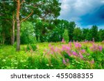 summer forest landscape in... | Shutterstock . vector #455088355