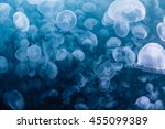 Water Jelly