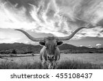 Black And White Texas Longhorn...