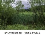 Swamp Area Located In The...