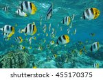 shoal of tropical fish  pacific ... | Shutterstock . vector #455170375