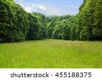 beautiful glade in summer pine... | Shutterstock . vector #455188375