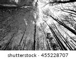 teak wood forest tree in black... | Shutterstock . vector #455228707