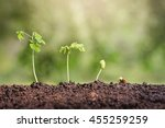 plant seed growing concept.... | Shutterstock . vector #455259259