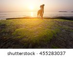 Stock photo sunrise of sea and dog running on the beach with sea weed and soft flare filter 455283037