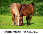 Two Horses Eating Grass Together