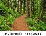Path Through A Lush Green Forest
