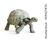 Stock photo large tortoise walking on a isolated white background d rendering 455427874