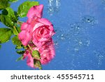 A Beautiful Pink Rose On Water...