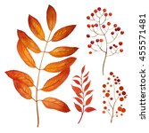 autumn leaves and flowers.... | Shutterstock . vector #455571481
