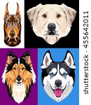 set of images of dogs   a... | Shutterstock . vector #455642011