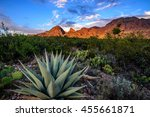 agave cactus | Shutterstock . vector #455661871