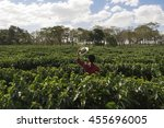 farmer with hat looking the...   Shutterstock . vector #455696005