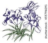 hand drawn illustration irises | Shutterstock .eps vector #455796091