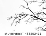 branch silhouette on a white... | Shutterstock . vector #455803411