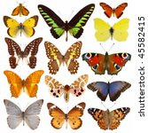 Stock photo collection of colored butterflies isolated on white 45582415
