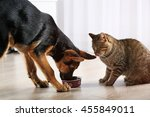 Stock photo cute cat and funny dog eating food 455849011